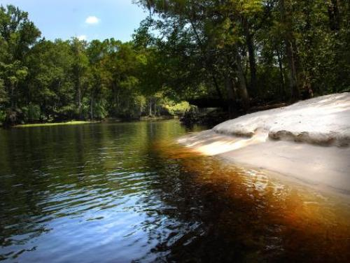 A sandy bank at Lumber River State Park