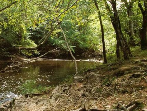 A creek at Medoc Mountain State Park