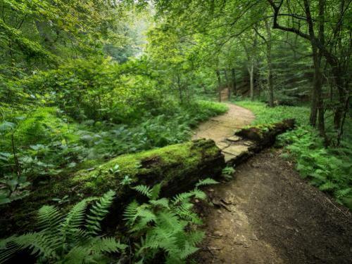 A trail winds through the woods at Occoneechee Mountain near Hillsborough