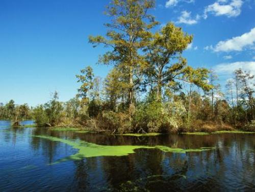The blackwater Scuppernong River at Pettigrew State Park