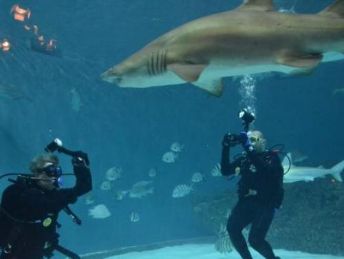 Divers in a tank at the North Carolina Aquarium on Roanoke Island