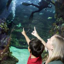 north carolina aquarium at fort fisher nc dncr