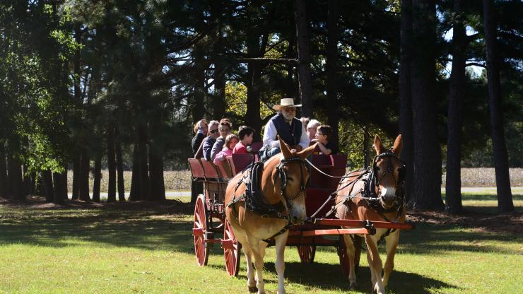 Bentonville cart ride