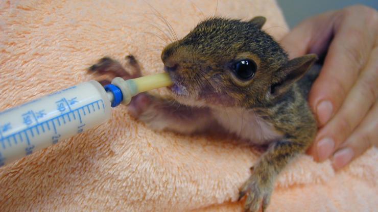 squirrel rehabilitation
