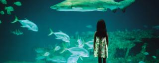 A girl looks into a tank at one of North Carolina's three aquariums