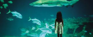 A girl looks into a tank at one of North Carolina's three aquariums