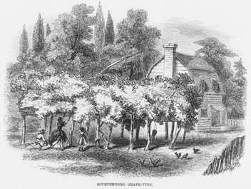 Scuppernong grape arbor beside a dwelling in northeastern North Carolina as depicted in an 1859.