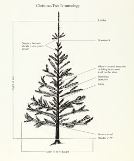 allegheny ashe avery top christmas tree producers nc dncr rh ncdcr gov christmas tree diagram geology origami christmas tree diagram