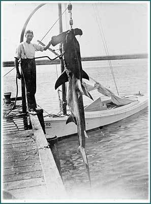 Gudger after catching a Hammerhead Shark off Beaufort, circa 1906. Image from the American Museum of Natural History.