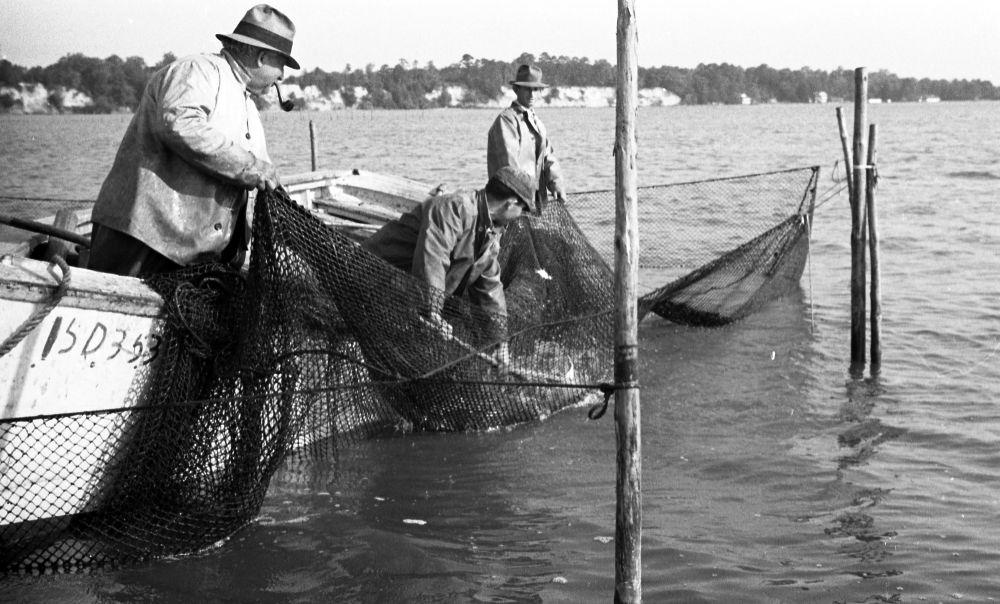 Dare County fisherman, circa 1935-40.