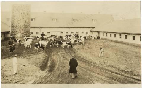 A period dairy farm in Greensboro. Image from UNC Greensboro University Libraries.
