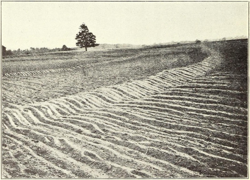 A completed set of Mangum terraces on a farm near Raleigh, circa 1912. Image from The Mangum Terrace in its Relation to Efficient Farm Management.