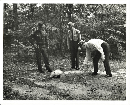 The release of Slow Poke the Possum in Raven Rock State Park in August 1970. Image from the State Archives