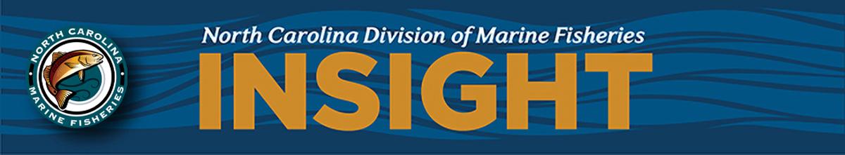 Insight newsletter banner