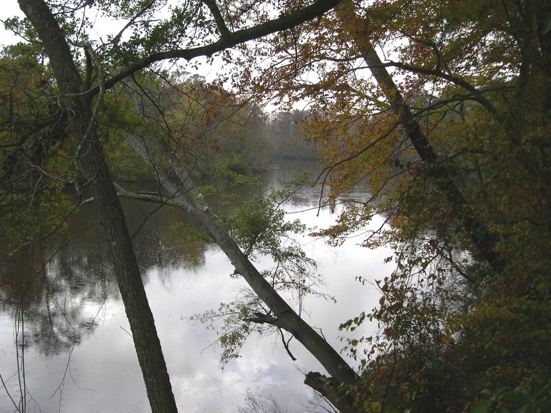 Roanoke River Near Roanoke Rapids