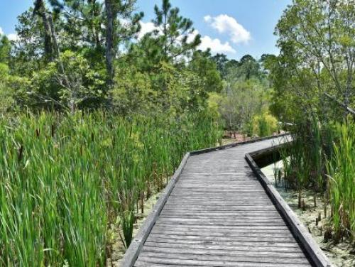 boardwalk through the wetlands