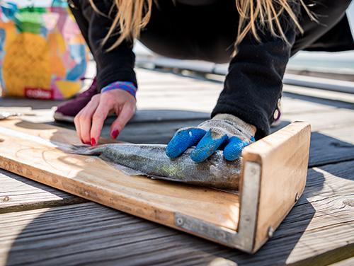 CAP employee measuring a fish
