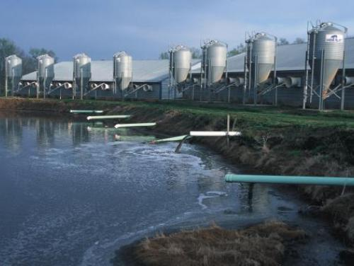 swine farm waste lagoon