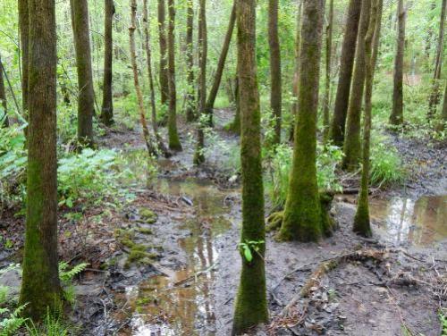 outdoor wetland woods
