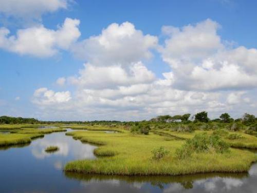 wetlands at Topsail Island, NC