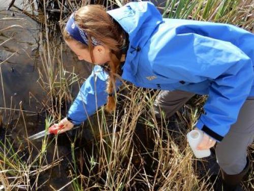Scientist taking wetland water sample