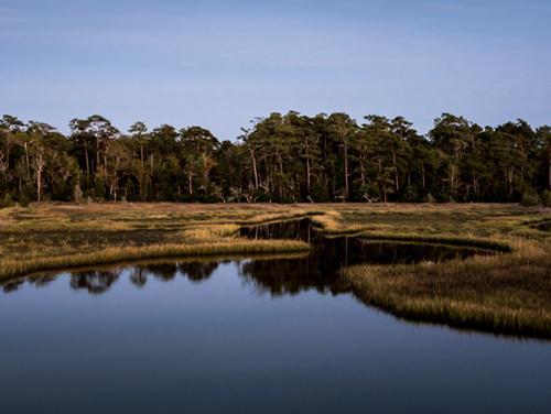 marsh habitat area