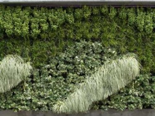 Green plants growing on a wall