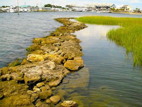 Estuarine shoreline