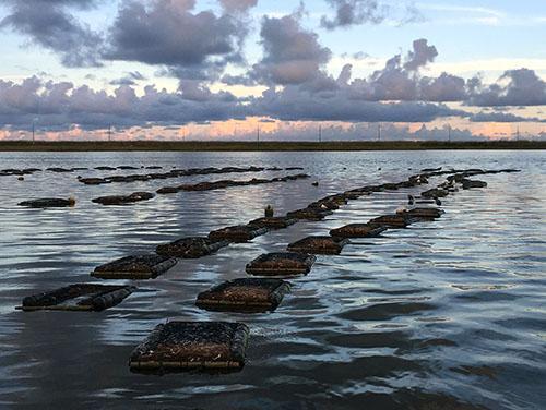 Shellfish Growing Area