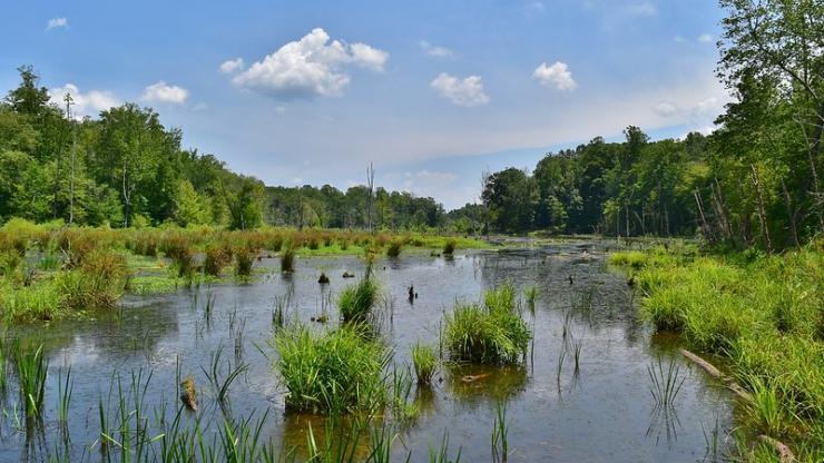 Richardson Taylor Preserve wetland
