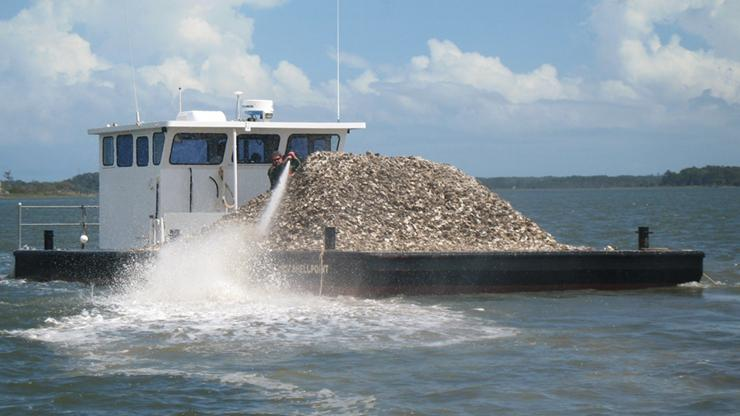 Oyster shells being deployed