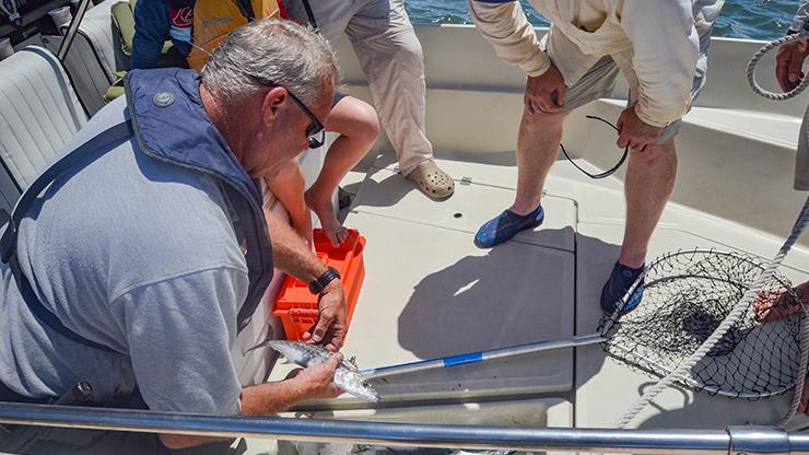 Marine Patrol officer checking fish