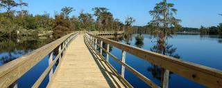 Pasquotank Boardwalk