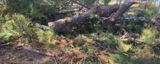 Tree debris