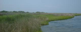 marsh habitat