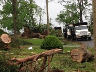 Downed trees and debris management trucks