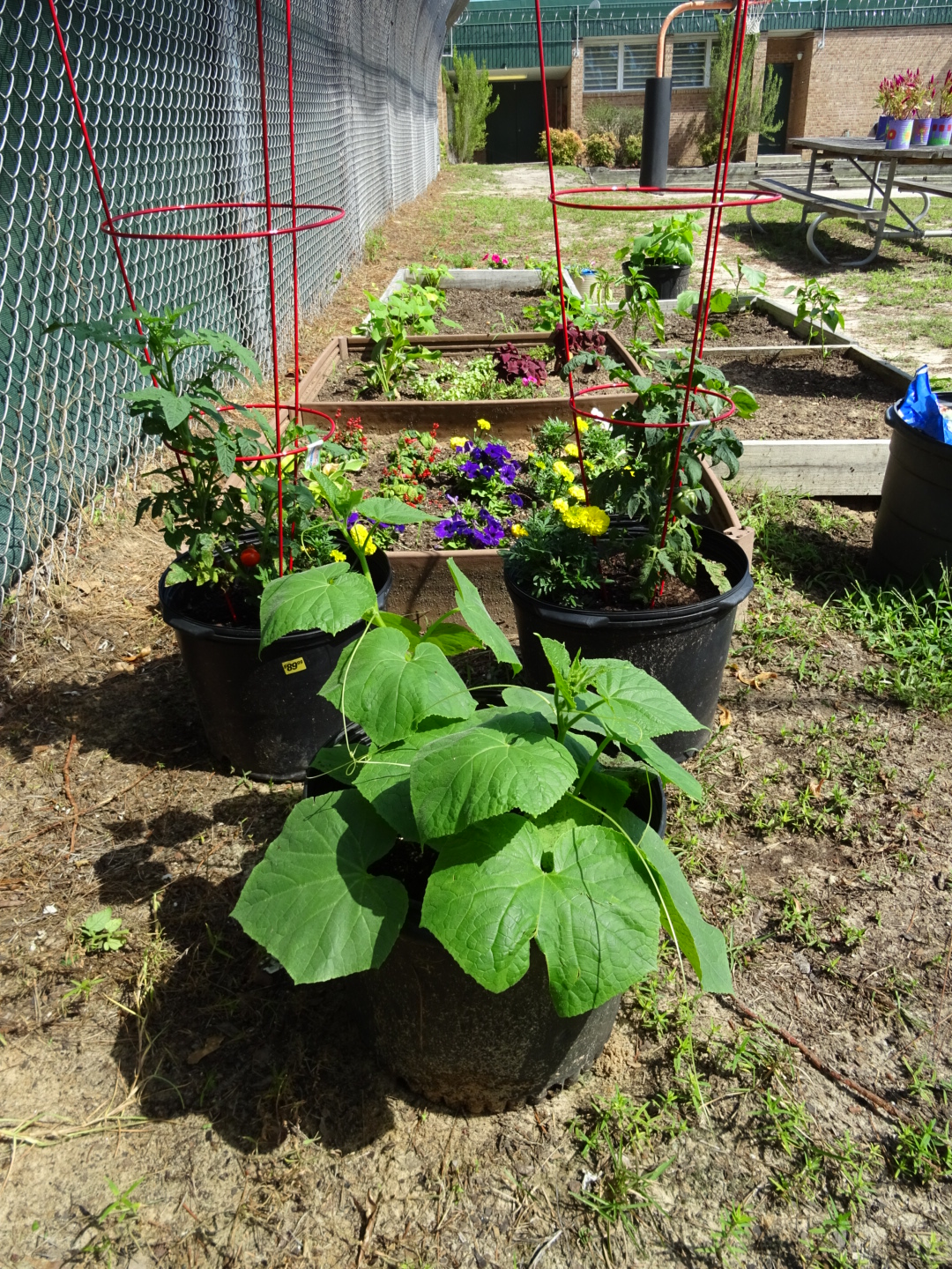 Vegetables growing