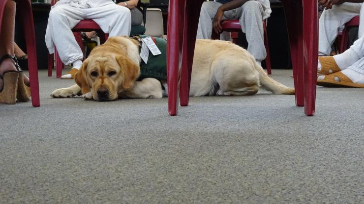 SAYLOR, the assistance dog at New Hanover Juvenile Detention Center, takes a rest during circle time.