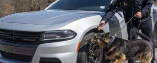 Officer with patrol dog sniffing tires