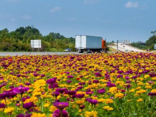 highway wildflowers
