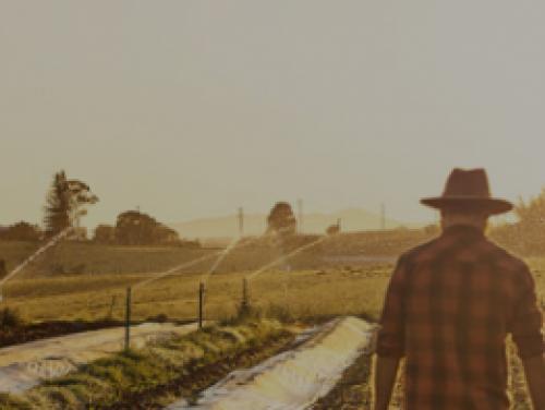 farmer walking between rows of a field on a foggy morning