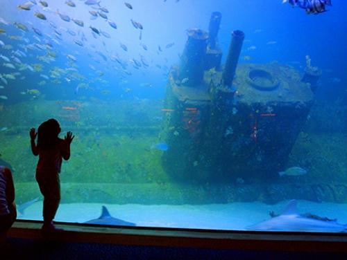 Child looking into aquarium