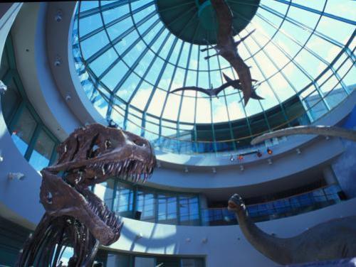 Dinosaur exhibit at Natural Sciences museum