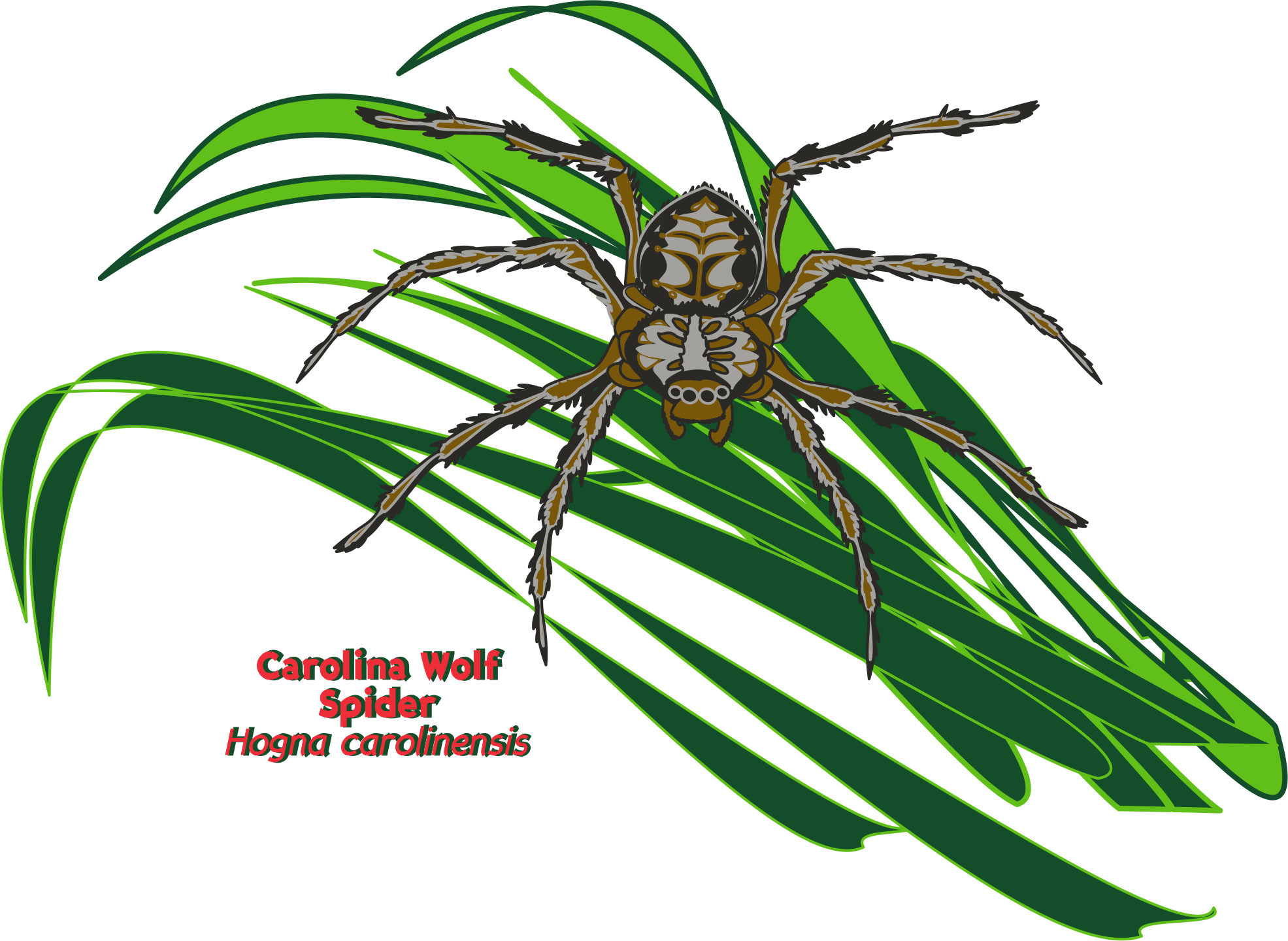 2017 Year Of The Spider Nc State Parks