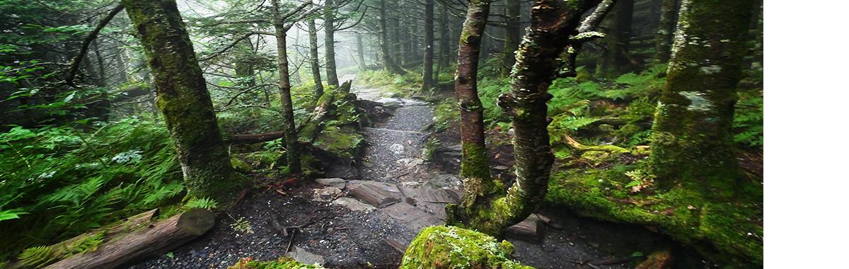 Mount Mitchell Winding Trail