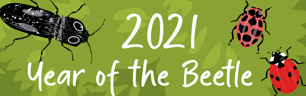 Year of the Beetle page banner