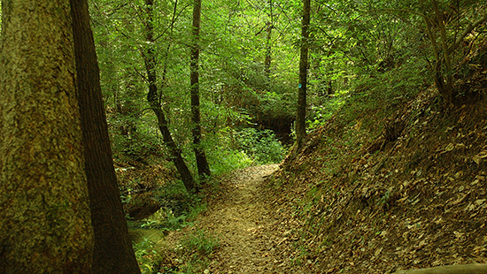 Hiking trail, Cliffs of the Neuse State Park. By B. Casey.