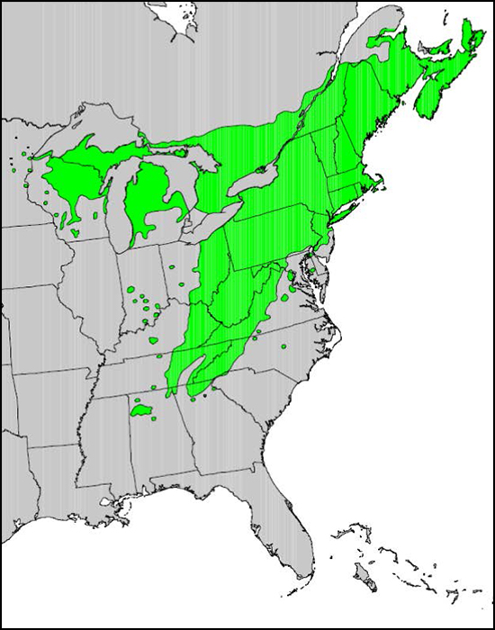 Eastern hemlock range. Photo courtesy of USGS.