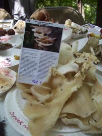 Mushroom ID hike, fungi