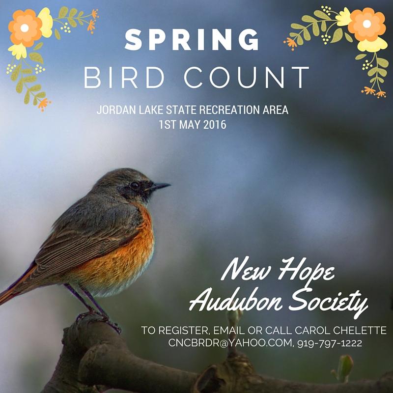 Ayudar a las aves de primavera: casas, alimentos & amp; Baños | Que Blog de Pájaro